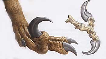 Raptor griffe.jpg
