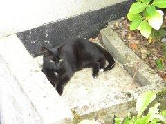 """Bagheera, mon premier """"chat d'écrivain"""". Crédit : Chris Bellabas"""