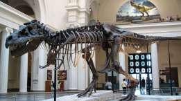 4ae3f7267d_85123_t-rex-steve-richmond-wikimedia-commons-cc-by-20