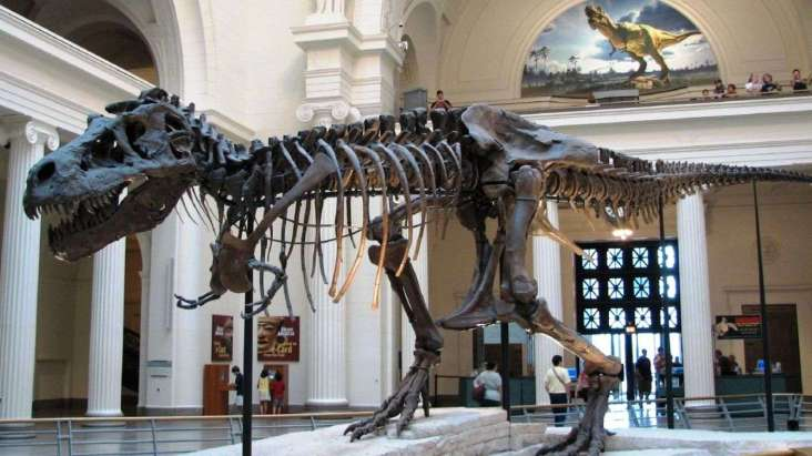4ae3f7267d_85123_t-rex-steve-richmond-wikimedia-commons-cc-by-20