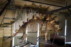 dinosaur skel